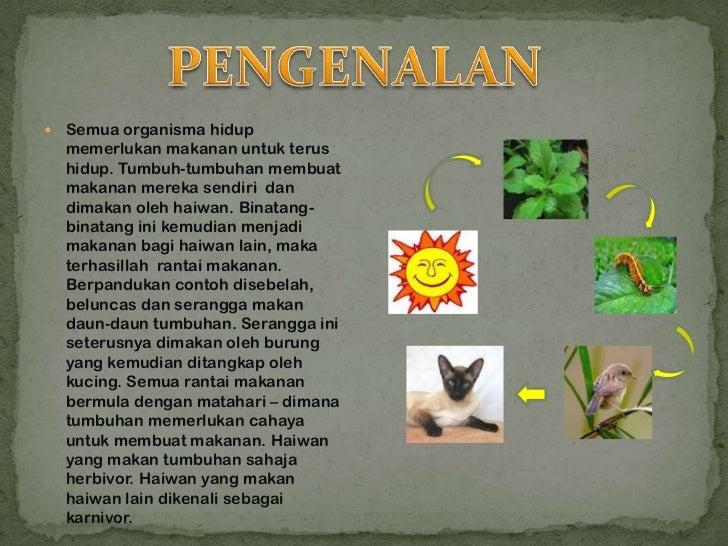    Semua organisma hidup    memerlukan makanan untuk terus    hidup. Tumbuh-tumbuhan membuat    makanan mereka sendiri da...