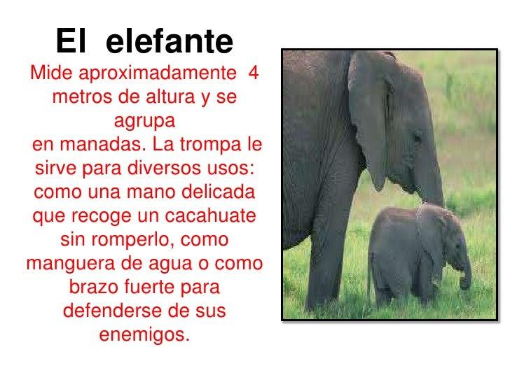 Notas Informativas Infantiles | MEJOR CONJUNTO DE FRASES
