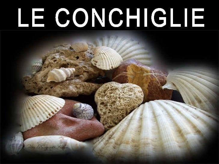LE CONCHIGLIE