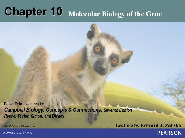 Chapter 10  Molecular Biology of the Gene  PowerPoint Lectures for  Campbell Biology: Concepts & Connections, Seventh Edit...