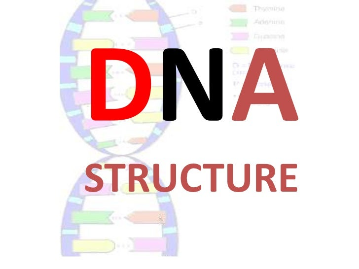 Notes on DNA and DNA structure