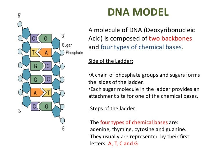 how to make a freestanding dna model