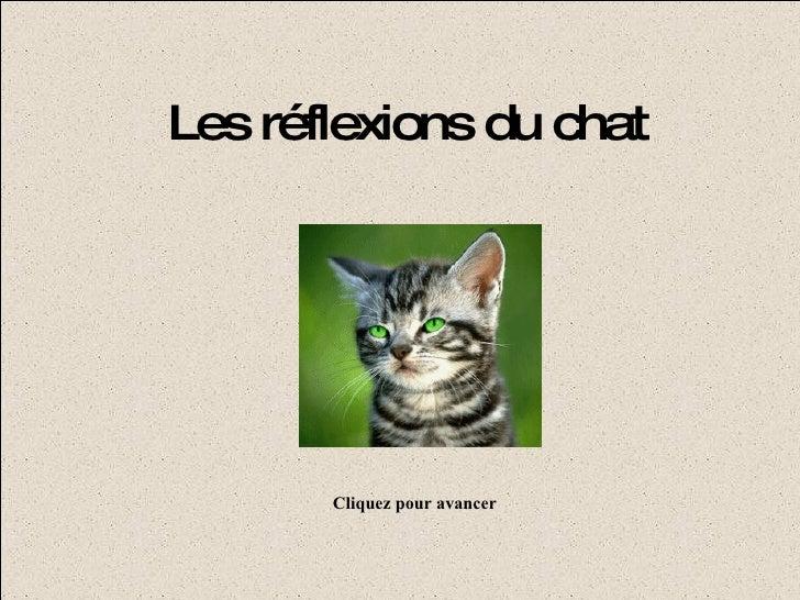 Les réflexions du chat Cliquez pour avancer