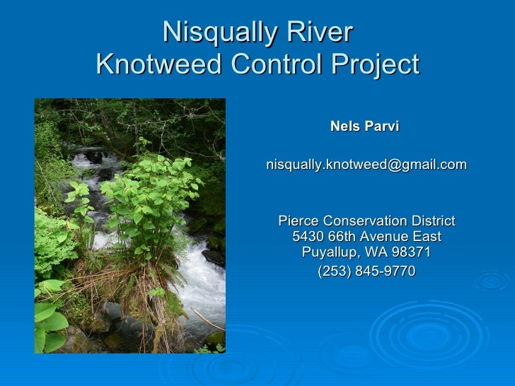 Nisqually River Knotweed Control Project Nels Parvi  [email_address] Pierce Conservation District 5430 66th Avenue East Pu...