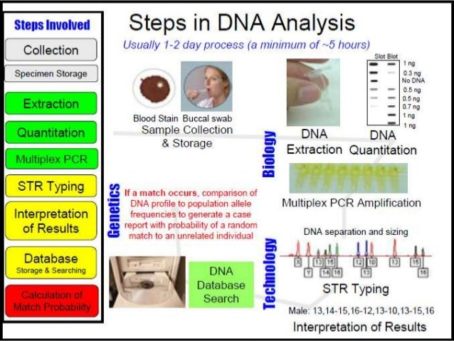 dna profiling using capillary gel electrophoresis biology essay Free gel electrophoresis papers, essays and equal amount of primers (10 pmol) the pcr product was extracted from agarose gel after gel electrophoresis using gel extraction kit (qiagen the implications of dna profiling - the implications of dna profiling former.