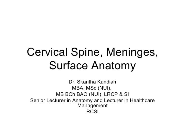 Ns4 Cervical Spine Cords And Nerves