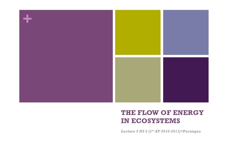 Ns 5 lecture 2 and 3 energy flows and productivity 2010