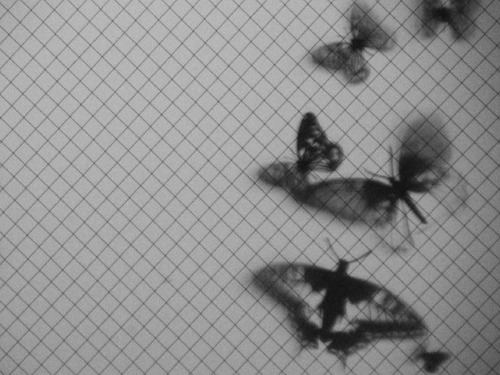 MothEaten™ Conversations With Nature Design Trilogy