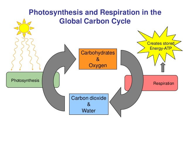reactants of chemosynthesis