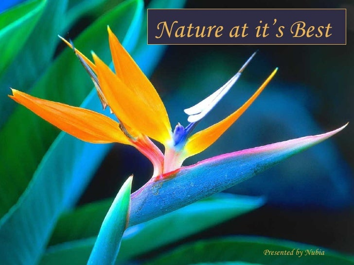 Pictures of Nature at Its Best Nature at it 39 s Best