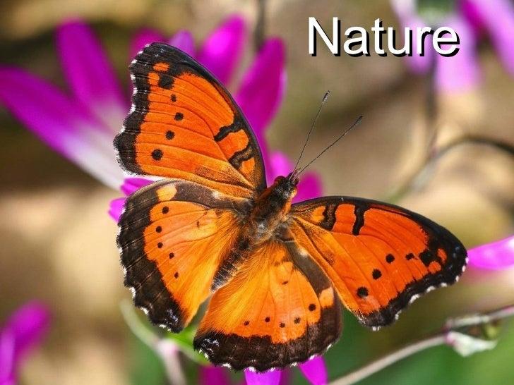 Nature at it's Best (part 2)