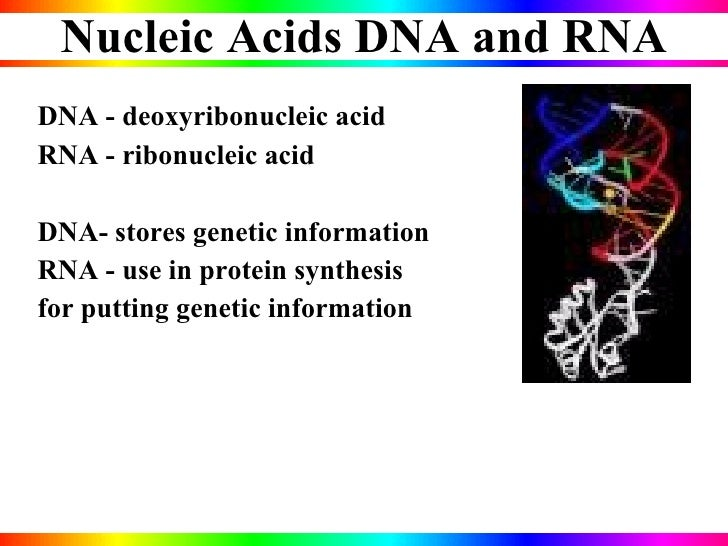 characterization of nucleic acids essay Nucleic acids have at least two functions: to pass on hereditary characteristics from one generation to the next, and to trigger the manufacture of specific proteins how nucleic acids accomplish these functions is the object of some of the most intense and promising research currently under way.