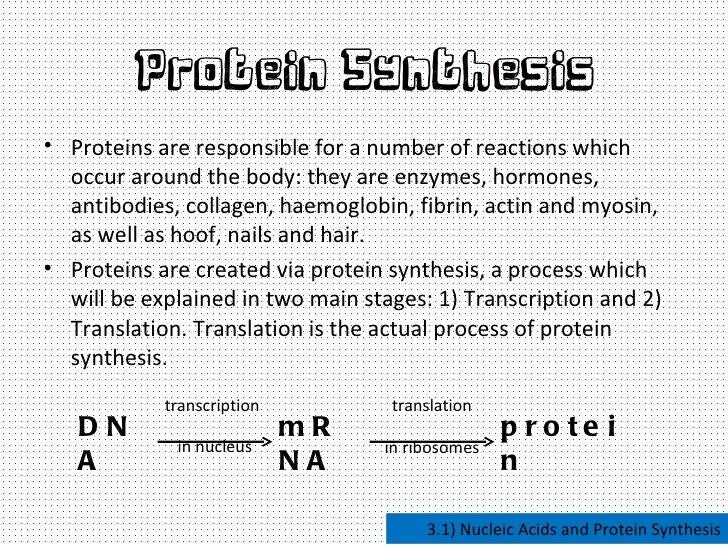 Attirant Gradeprotein Synthesis Essay Writefictionwebfccom Gradeprotein Synthesis  Essay