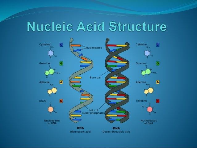 1 nucleic acid structure and function