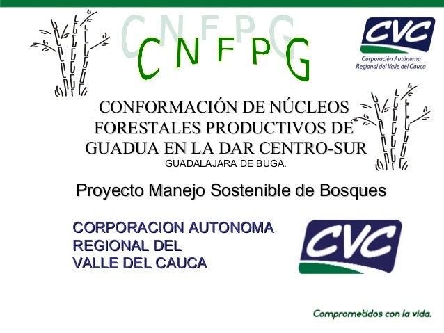CONFORMACIÓN DE NÚCLEOS FORESTALES PRODUCTIVOS DE GUADUA EN LA DAR CENTRO-SUR GUADALAJARA DE BUGA.  Proyecto Manejo Sosten...