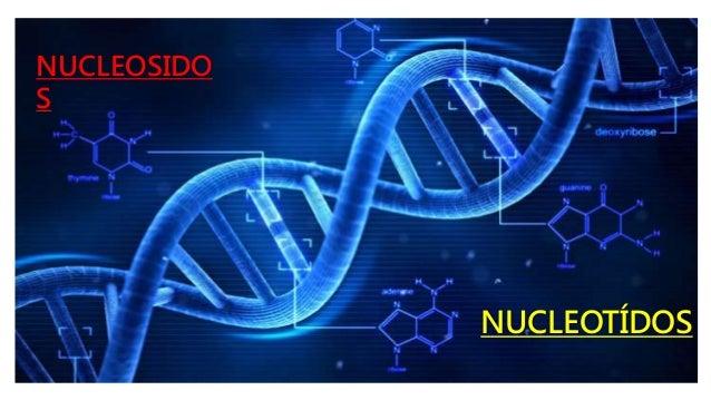 NUCLEOSIDO S NUCLEOTÍDOS