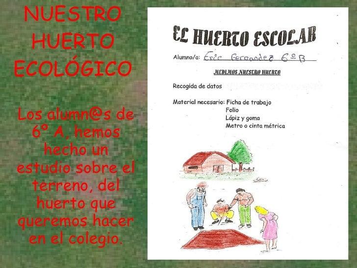 NUESTRO HUERTO ECOLÓGICO Los alumn@s de 6º A, hemos hecho un estudio sobre el terreno, del huerto que queremos hacer en el...