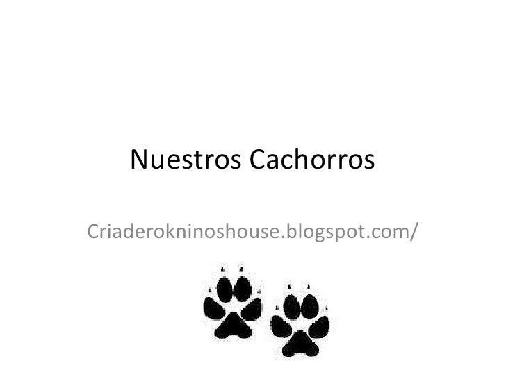 Nuestros Cachorros<br />Criaderokninoshouse.blogspot.com/<br />