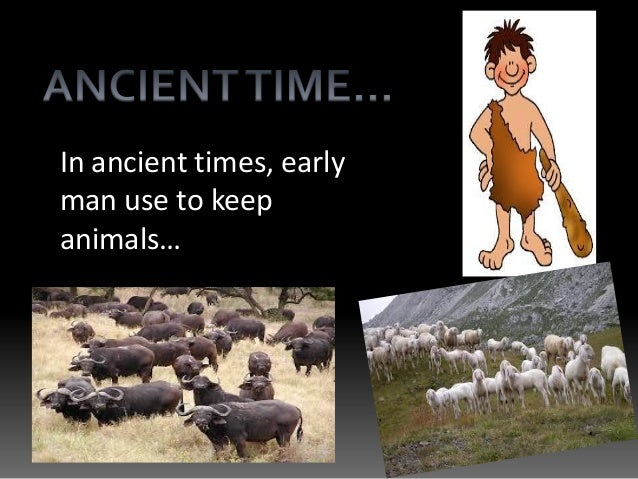 In ancient times, early man use to keep animals…