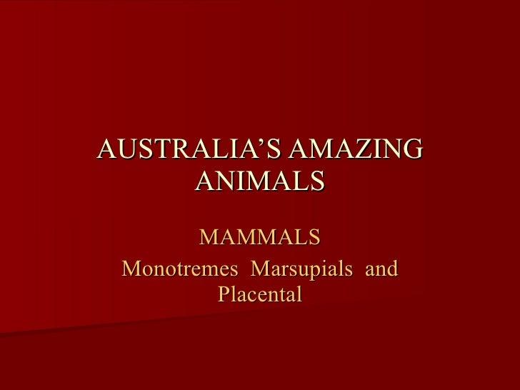 AUSTRALIA'S AMAZING ANIMALS MAMMALS Monotremes  Marsupials  and Placental