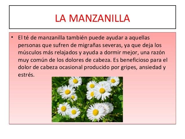Plantas medicinales 1 for Manzanilla planta medicinal para que sirve