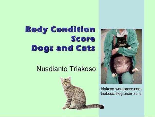 Dog Body Condition Score Score Cat Dog 2009 Body