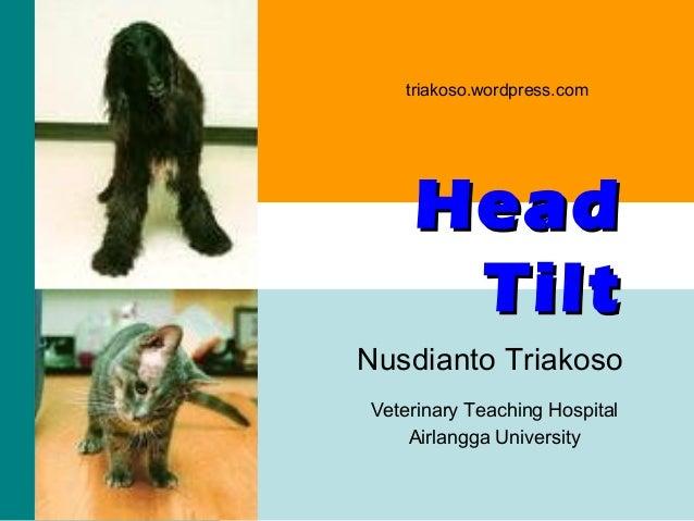 triakoso.wordpress.com  Head Tilt Nusdianto Triakoso Veterinary Teaching Hospital Airlangga University triakoso - head til...