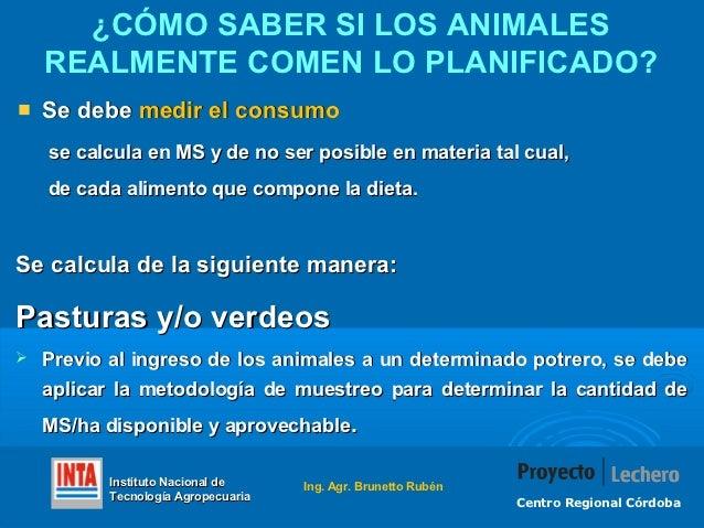 ¿CÓMO SABER SI LOS ANIMALES    REALMENTE COMEN LO PLANIFICADO?    Se debe medir el consumo    se calcula en MS y de no ser...