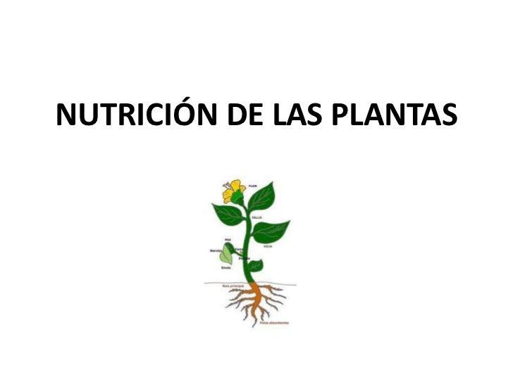 nutrici n de las plantas
