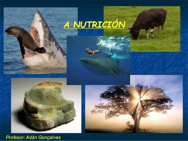 A NUTRICIÓN  Profesor: Adán Gonçalves