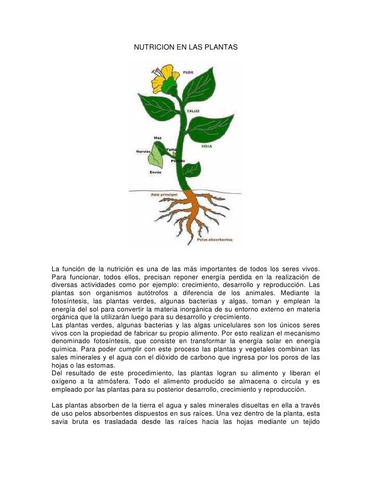 NUTRICION EN LAS PLANTASLa función de la nutrición es una de las más importantes de todos los seres vivos.Para funcionar, ...
