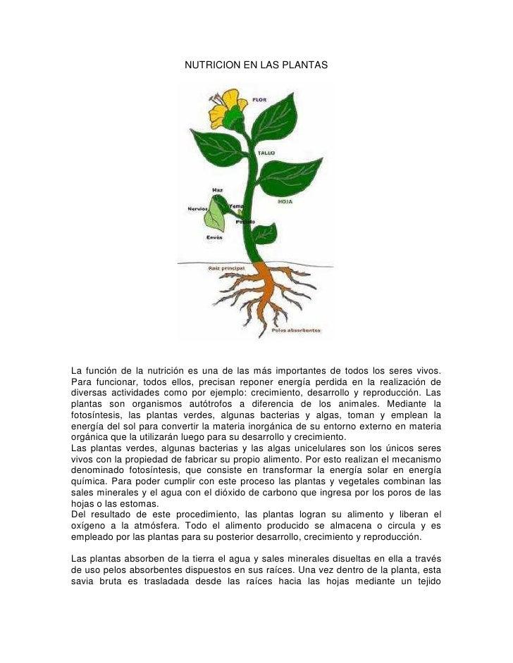 Nutricion en las plantas y animales