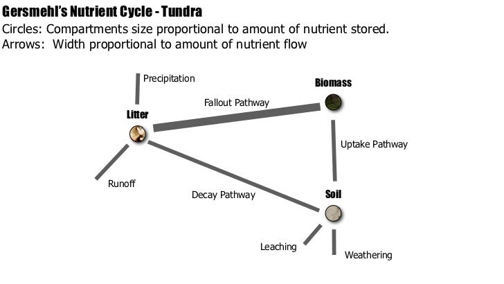IB Geography > Ecosystems > Nutrient Cycling