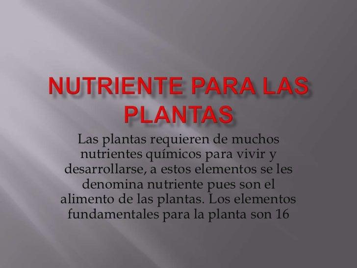 Las plantas requieren de muchos   nutrientes químicos para vivir ydesarrollarse, a estos elementos se les    denomina nutr...