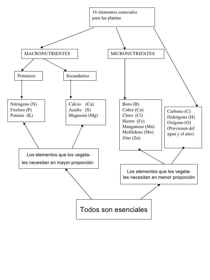 Nitrógeno (N) Fósforo (P) Potasio  (K) Calcio  (Ca) Azufre  (S) Magnesio (Mg) Boro (B) Cobre (Cu) Cloro  (Cl) Hierro  (Fe)...