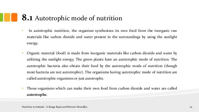 essay autotrophic mode nutrition