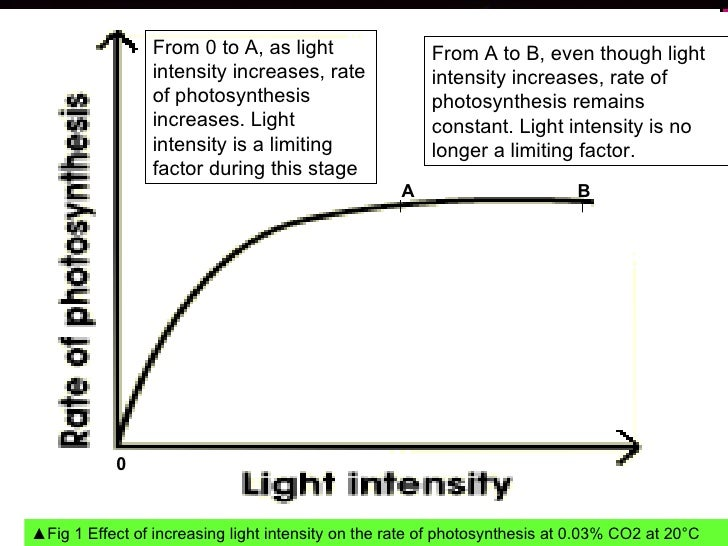 light intensitys effect on photosynthesis essay Essay about the effect of light intensity on the rate of photosynthesis 528 words | 3 pages is able to absorb energy from this light the water molecules are split into hydrogen and oxygen molecules, the oxygen escapes into the atmosphere while the hydrogen is mixed with the carbon dioxide to create sugar.