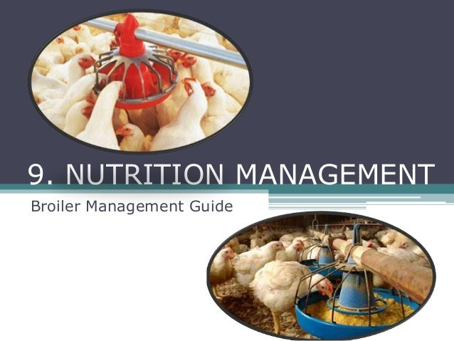 Nutrition management Broiler