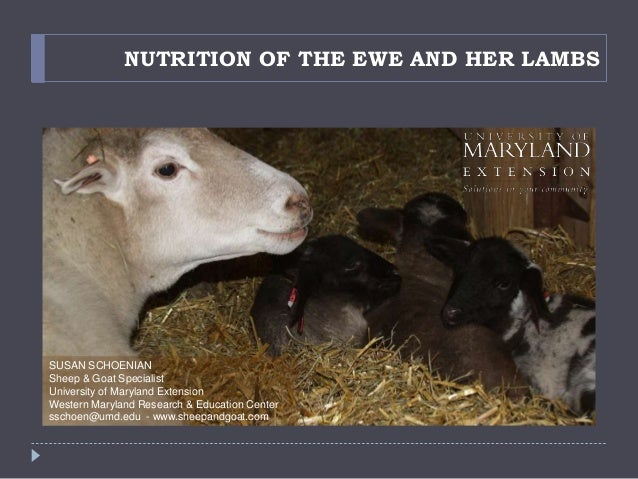 NUTRITION OF THE EWE AND HER LAMBS SUSAN SCHOENIAN Sheep & Goat Specialist University of Maryland Extension Western Maryla...
