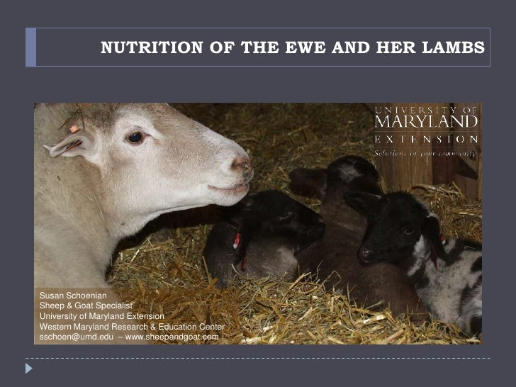 Nutrition Of The Ewe And Lamb
