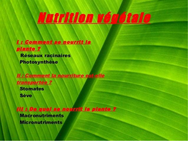 Nutrition végétale I: Comment se nourrit la plante? Réseaux racinaires Photosynthèse II : Comment la nourriture est-elle...