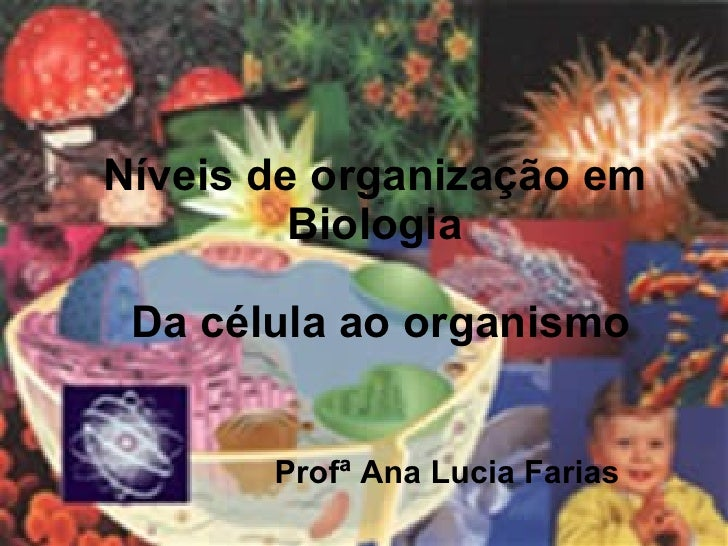 Níveis de organização em Biologia Profª Ana Lucia Farias Da célula ao organismo