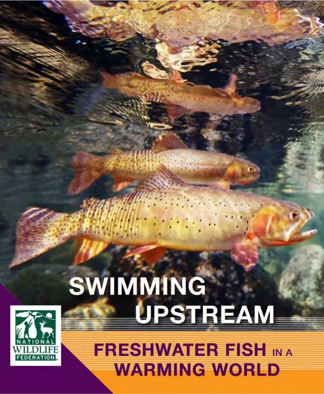 NWF Report: Swimming Upstream