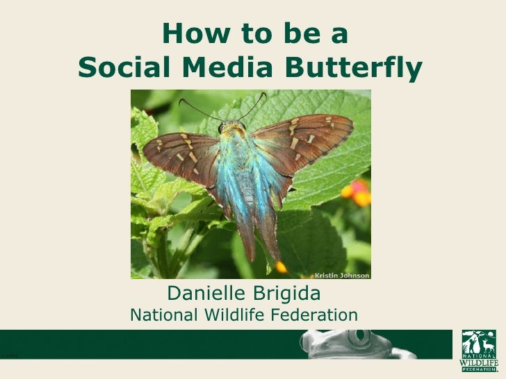 How To Be A Social Media Butterfly