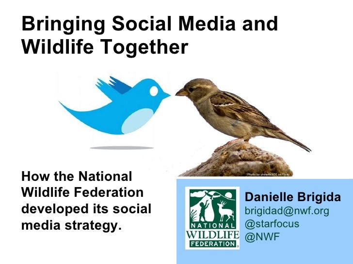 Bringing Social Media and Wildlife Together Danielle Brigida [email_address] @starfocus @NWF   How the National Wildlife F...