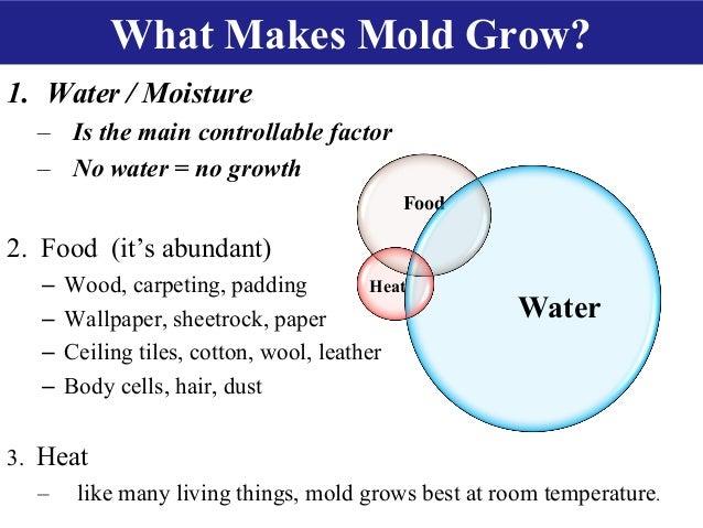 Best Room Temperature To Prevent Mold