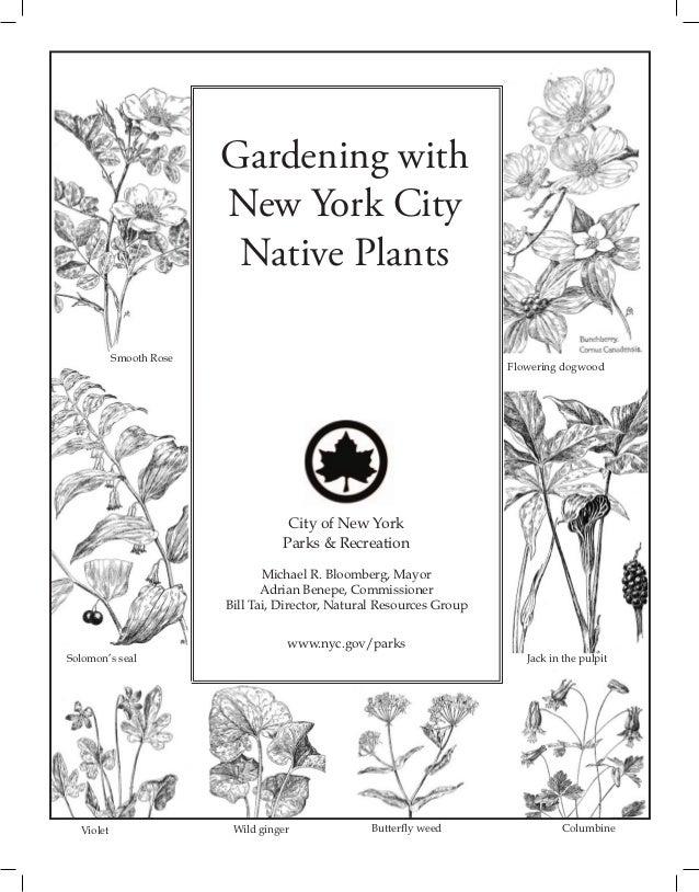 Gardening with New York City Native Plants
