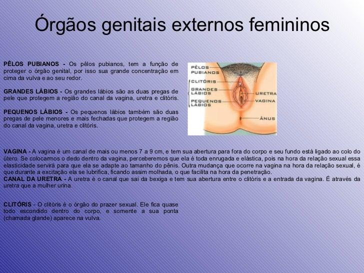 Órgãos genitais externos femininos CLITÓRIS  - O clitóris é o órgão do prazer sexual. Ele fica quase todo escondido dentro...