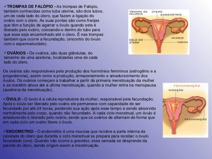 <ul><li>TROMPAS DE FALÓPIO -  As trompas de Falópio, também conhecidas como tuba uterina, são dois tubos, um de cada lado ...