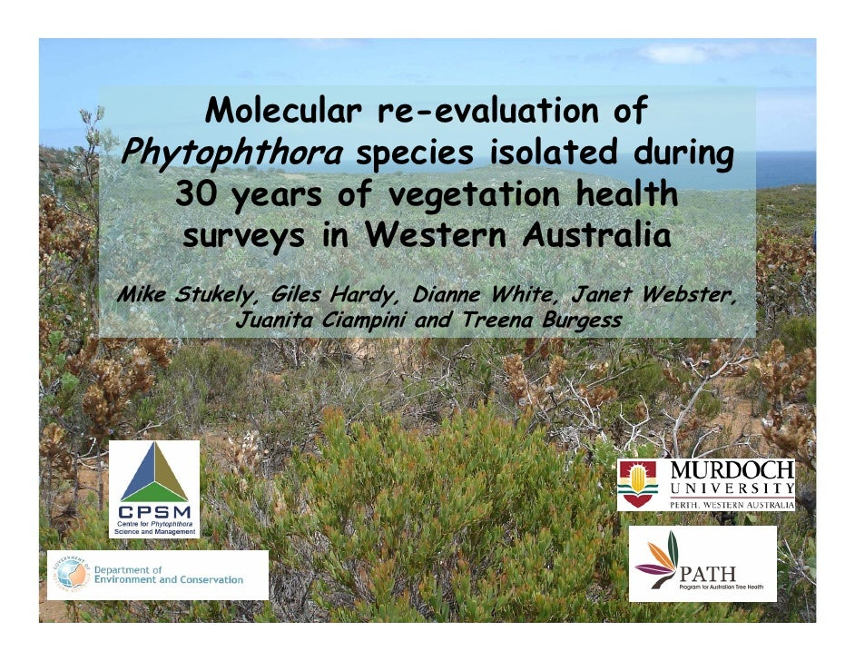 Molecular re-evaluation of Phytophthora species isolated during    30 years of vegetation health    surveys in Western Aus...
